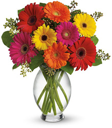 Gerbera Brights from Maplehurst Florist, local flower shop in Essex Junction